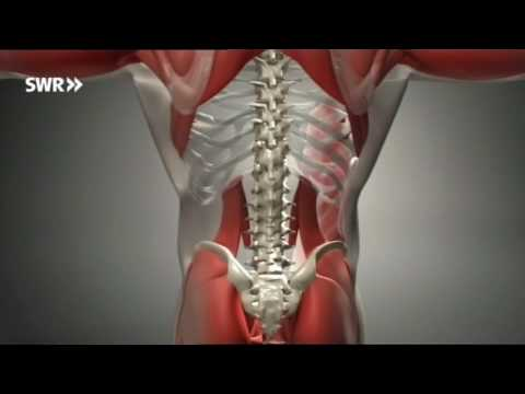 Kampf dem Rückenschmerz: PilatesRehaTraining