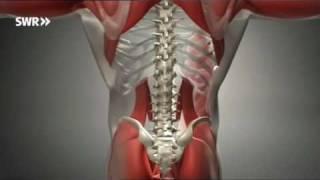 Kampf dem Rückenschmerz: Pilates-Reha-Training