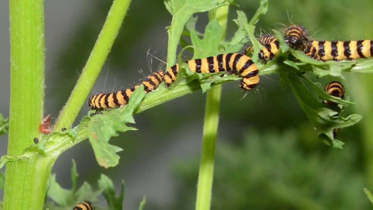 how to get rid of moth caterpillars