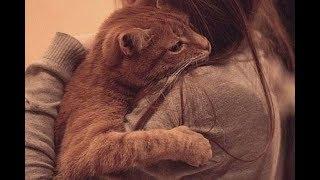 Девочка спела своей любимой больной кошке песню. Невозможно удержать слез!