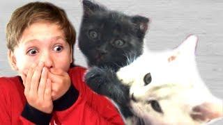 КОЛЯ и Кошка  Марфа СПАСАЮТ от СМЕРТИ Котёнка НИКИСА