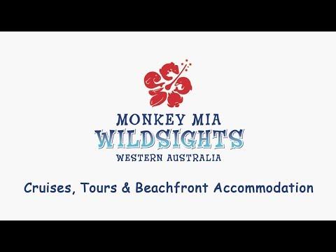 Monkey Mia Wildsights Intro