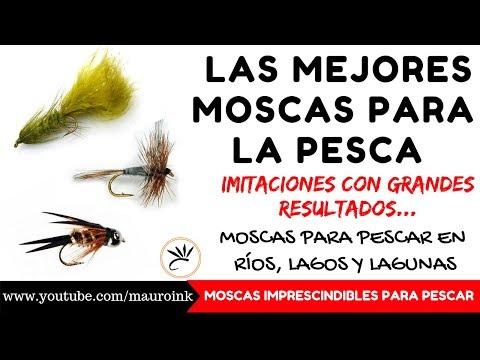 LAS MEJORES 6 MOSCAS para PESCA CON MOSCA (FUNCIONAN) | FLY FISHING