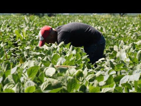 Soja-Bauern in den USA - die Leidtragenden im Handelsstreit