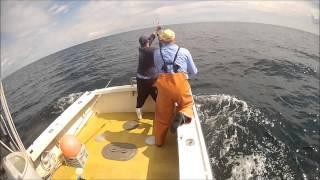 900 lb Giant bluefin tuna aboard the Typhoon Sept 16, 2014