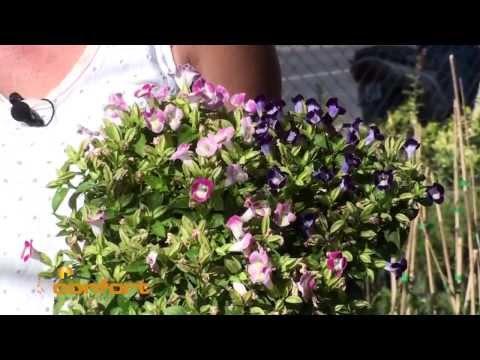 VIVERO ALEGRÍA - Plantas de Sol