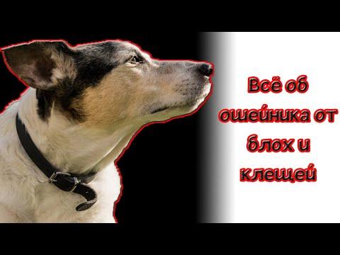 Вопрос: Что лучше применять от клещей для собаки ошейник или капли Почему?