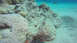 SCUBA DIVING IN EILAL 13-14/12/2018 - 2