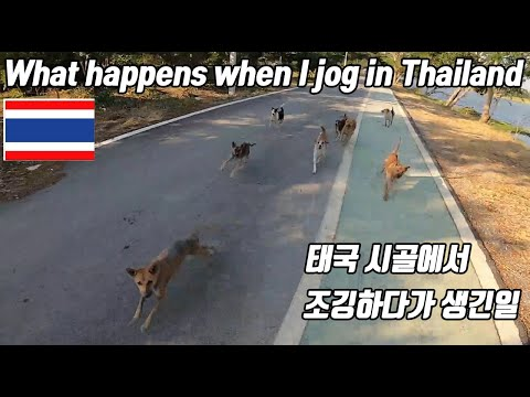 What happens? if you run when you meet eight dogs?