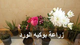 طريقة زراعة الورد الجوري و الارولا (( من بوكيه الورد ))