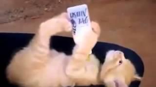 видео приколы котёнок пьёт молоко из бутылки
