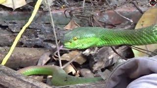 truy tìm loài rắn độc hung dữ gần nhà bỏ hoang /solid reading