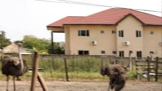 ostrich farm in ghana