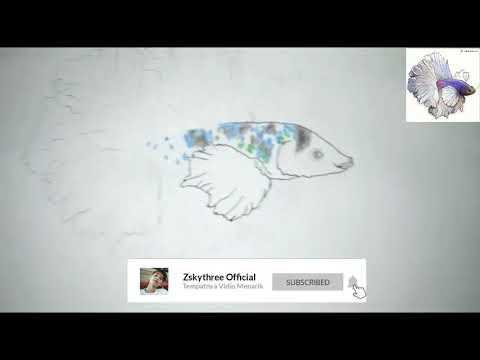 710 Koleksi Gambar Ikan Cupang Dengan Pensil Gratis Terbaru