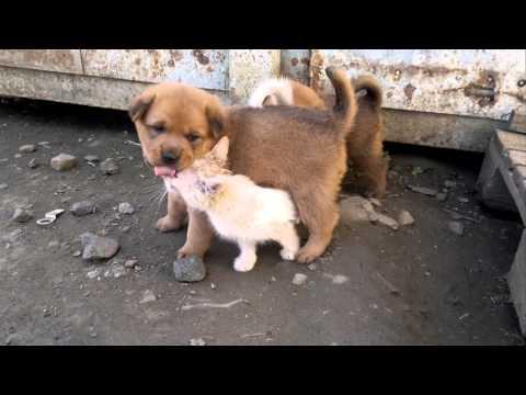 Два щенка и котёнок