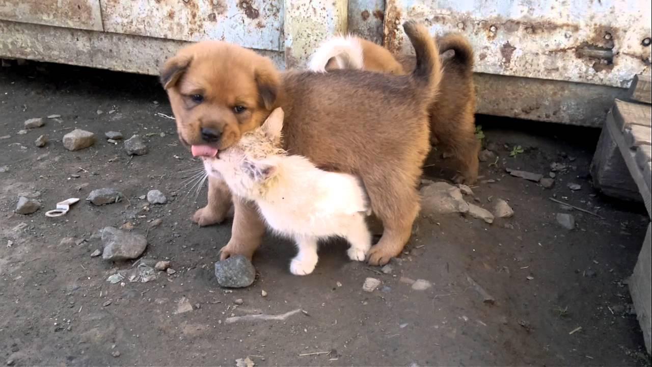 смешные фото щенков и котят