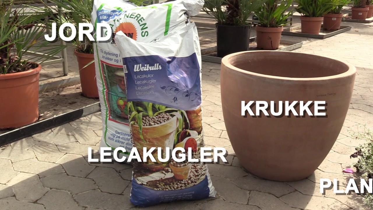Holbæk Plante Skole Juli-tip: Sommerblomster i krukker - YouTube