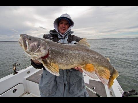 Insane Trophy Lake Trout on Fort Peck Reservoir