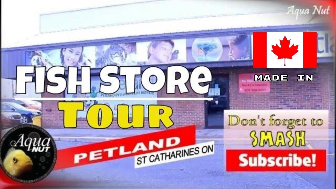 Fish aquarium in niagara falls - Petland Fish Store Tour Niagara S Top Aquarium Fish Tank Shop Tour