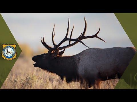 Wyoming Hunting - 2017 Hunt Seasons