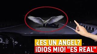Aparecen Angeles Captados En Video Volando En El Cielo | Visión Celestial | Milagros