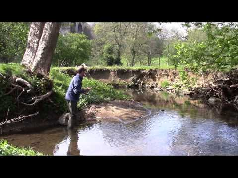 A Yorkshire Beck - Trout Fishing & Wildlife