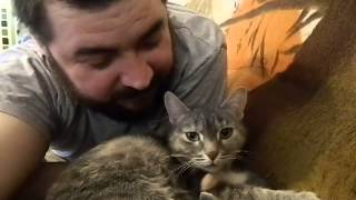 кошка разговаривает с хозяином