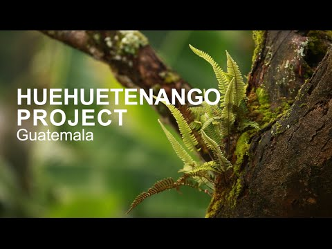 HUEHUETENANGO PROJECT IN GUATEMALA - Agroforestry with coffee farmers
