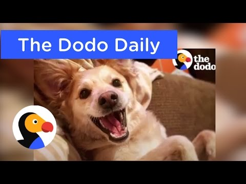 Best Animal Videos: Happiest Dog on Earth & More | The Dodo Daily Ep. 4