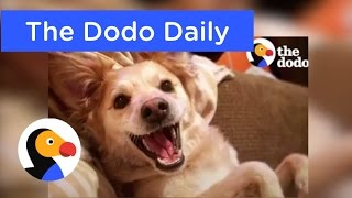 Happiest Dog on Earth! Best Animal Videos on YouTube | The Dodo Daily Ep. 4