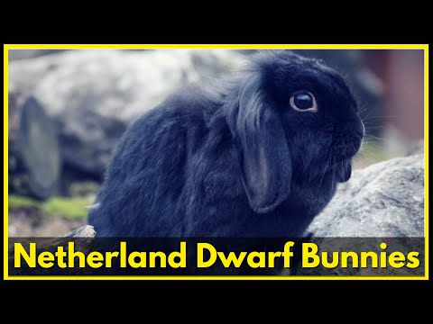90 Seconds Of Precious Netherland Dwarf Bunnies  - Adorable Rabbits Compilation