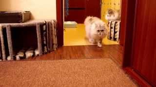 кот, мечтающий стать собакой