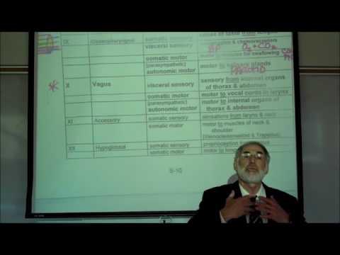 CRANIAL NERVES by Professor Fink