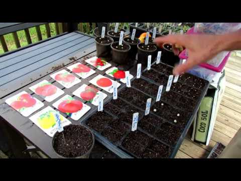 How to Start Your Cool Weather/Fall Vegetable Garden in Flats: Why, How, General Care & Varieties!