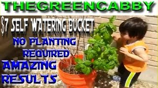 $7 Dollar Self Watering Bucket - NO PLANTING REQUIRED - AMAZING RESULTS - Earthbox Container Planter