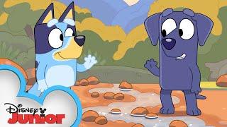 Bluey Makes a Camping Friend!   Bluey   Disney Junior