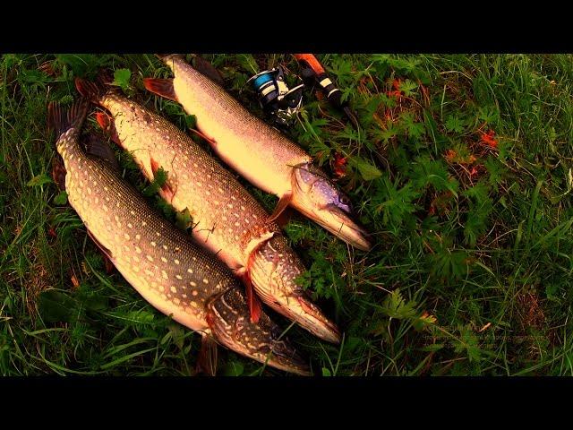Рыбалка на большую щуку осенью