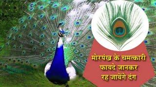 मोरपंख के चमत्कारी एवं अचूक टोटके ।। Peacock Remedies