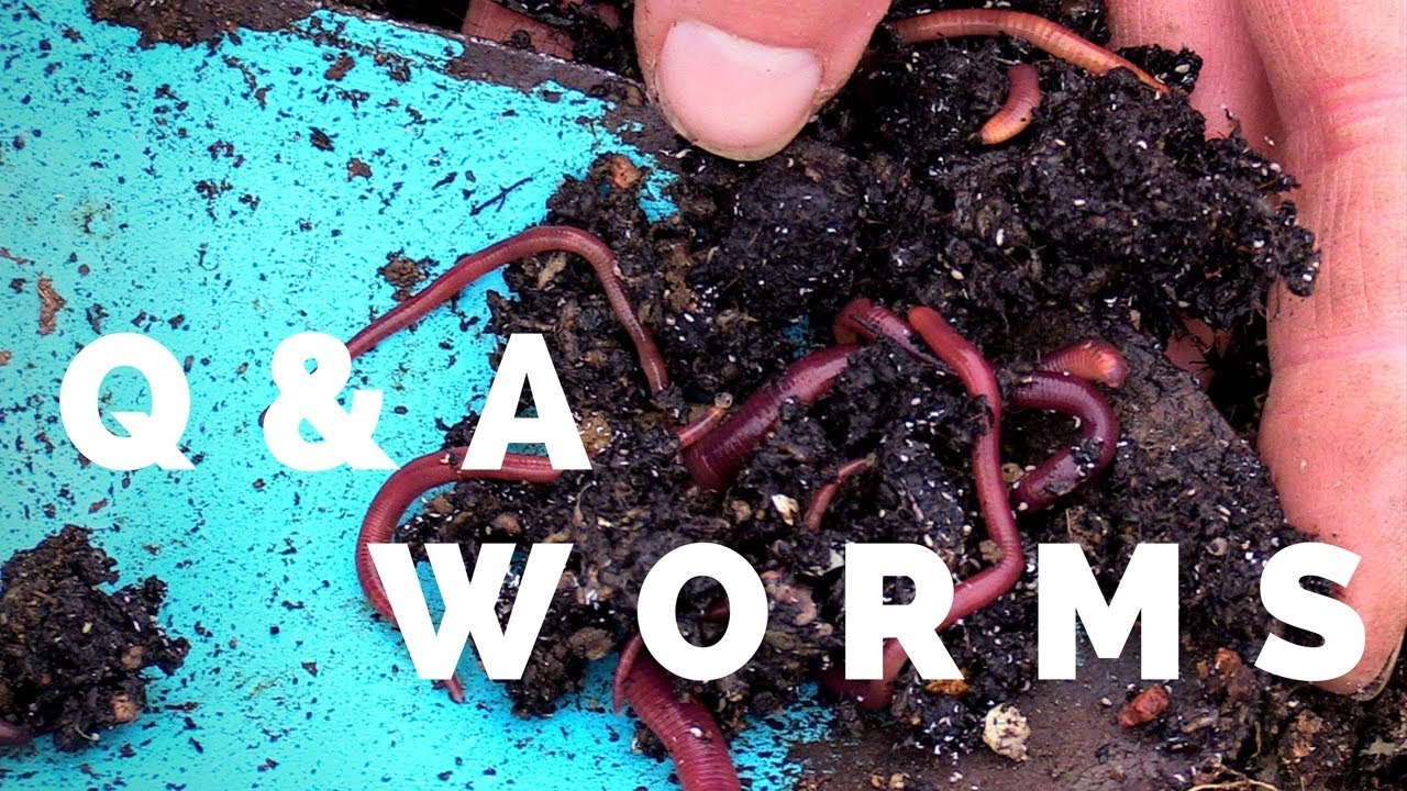 Q&A - How did the worms get into the pot?