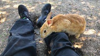 「うさぎ島」の異名を持つ島。大久野島に住むウサギたちについて
