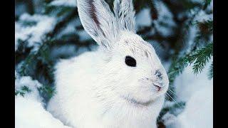 Животный мир, Животные зимой,