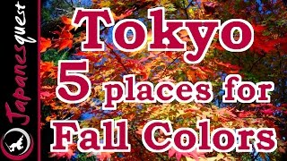 Top 5 Places to See the Fall Colors of Tokyo!