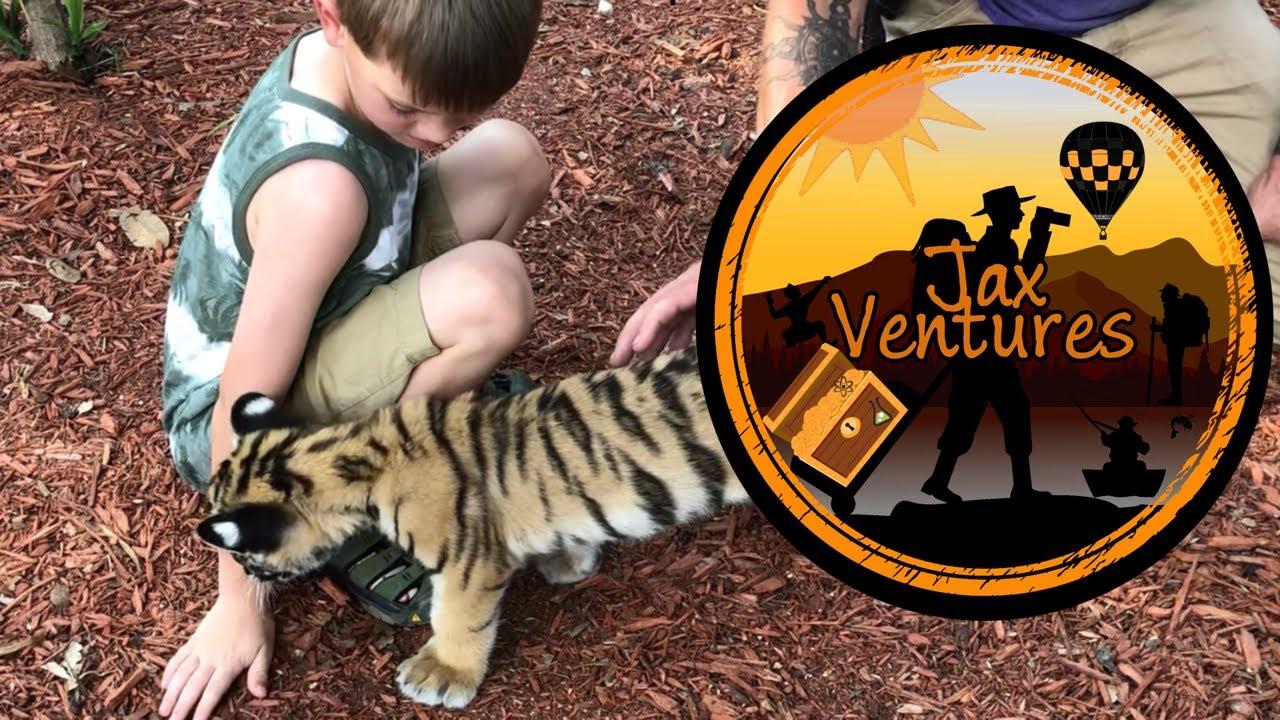Kid Tames Baby Tiger JaxVentures at Aloha Safari Zoo - Field Trip Ideas in Cameron, NC