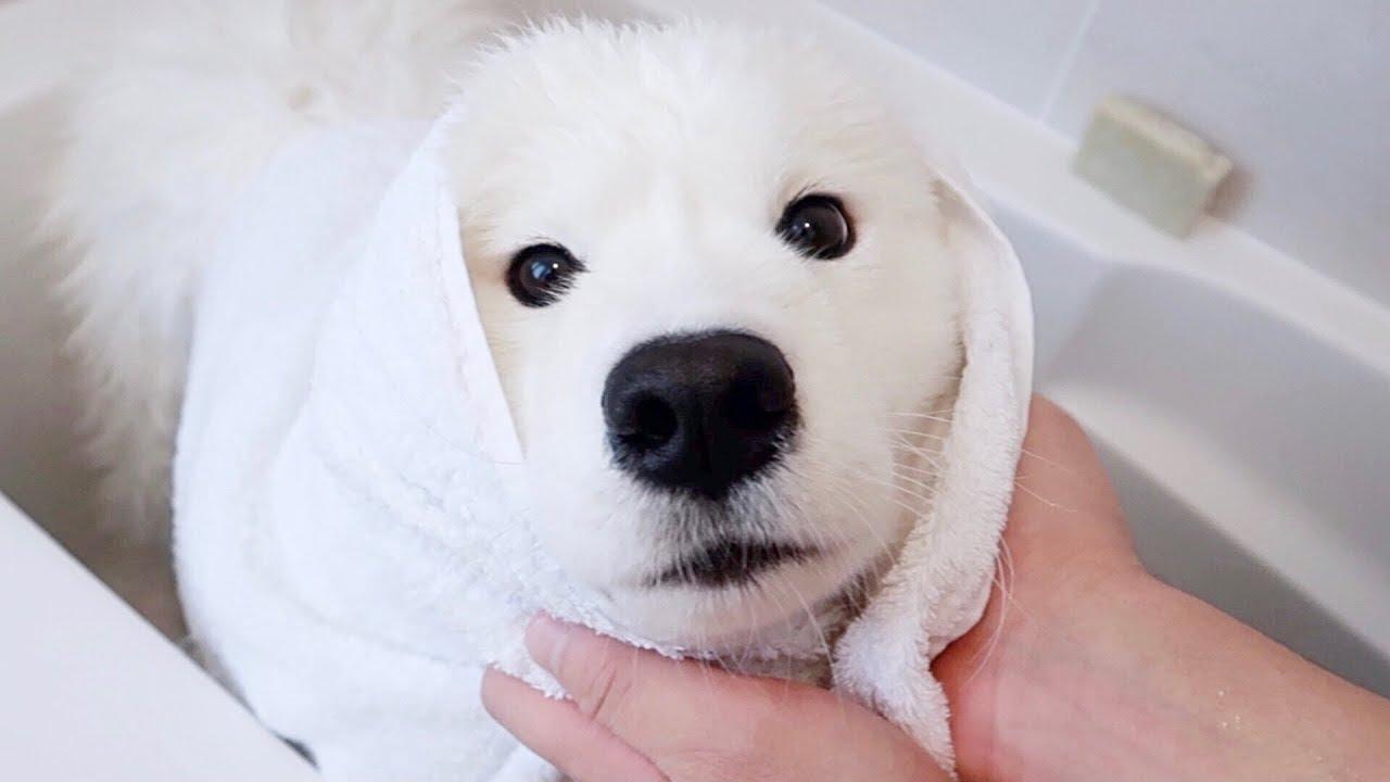 목욕하는데 이렇게 귀엽기 있기 없기?