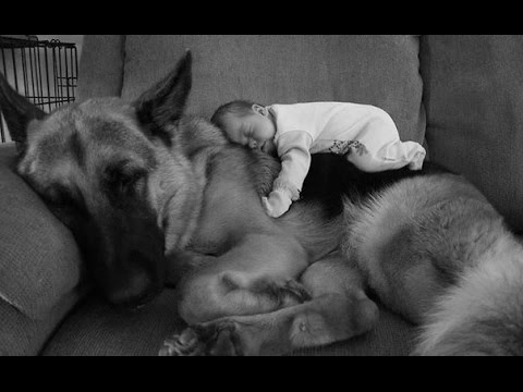 Собаки-герои