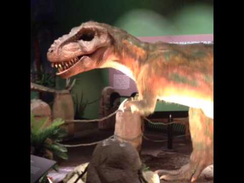 Dinosaurs Unearthed - Witte Museum