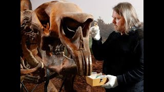 Man Goes To Pee In The Woods And Accidentally Uncovers A 50,000 Year Old Archaeological Wonde