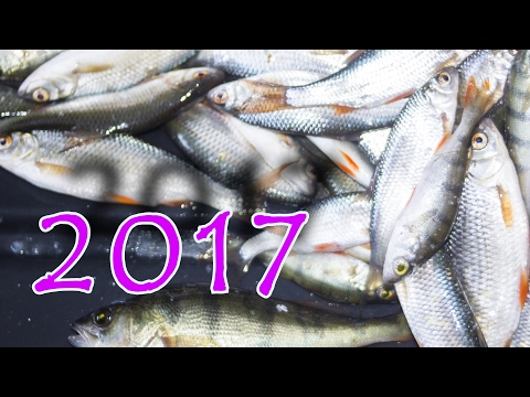 рыбалка в челябинской области видео лещ