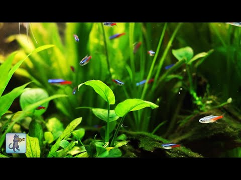 3 HOURS of Relaxing Aquarium Fish / Tropical Fish Tank & The Best Relax Music (1080p HD)