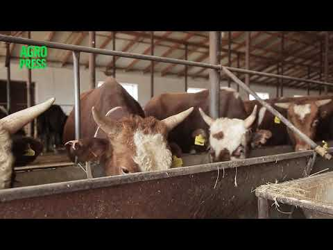 Выезд за границу запрещен: Минсельхоз закроет экспорт живого скота